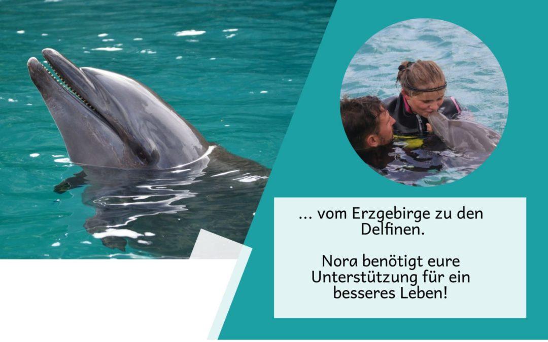 … vom Erzgebirge zu den Delfinen